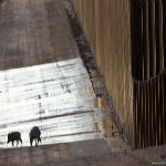 How Donald Trump's Wall May Kill Off Hundreds Animals Trying To Migrate