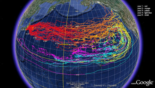 Risultati immagini per 1/3 of Earth's Oceans May Be Contaminated With Fukushima Radiation