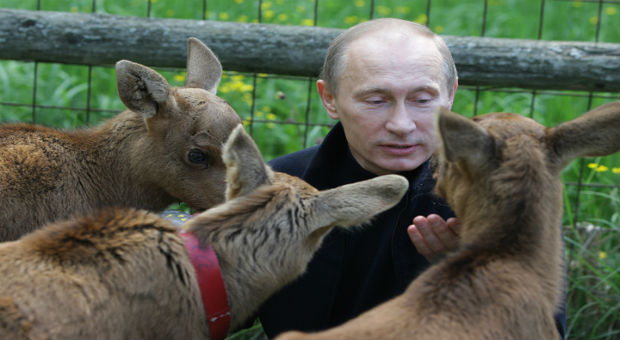 Putin Announces Tougher Penalties For Animal Cruelty In Russia