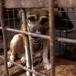 thumbnail for New Animal Protection Bill Could See Abusers Get 7 Years in Prison