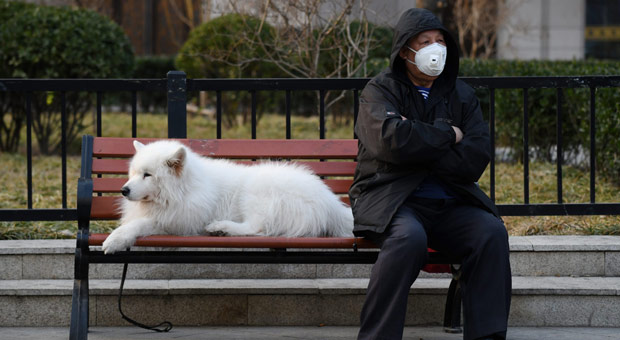 Chinese City to Ban Residents Eating Dogs in Wake of Coronavirus Outbreak