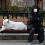news thumbnail for Chinese City to Ban Residents Eating Dogs in Wake of Coronavirus Outbreak
