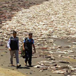 Fukushima Scientists: Days Of Eating Fish From The Ocean Are OVER