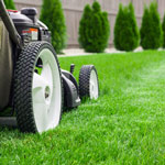 New York Times: Lawns are a Symbol of Racism