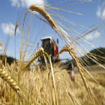 Scotland Is Now Set To Ban All Genetically Modified Crops