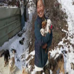 South Korean Women Saves Puppies From Being Boiled Alive