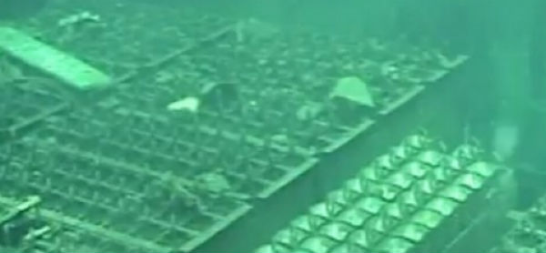 the tokyo electric power company  tepco  are claiming that almost all the fuel inside one of the fukushima nuclear plant   s reactors has melted